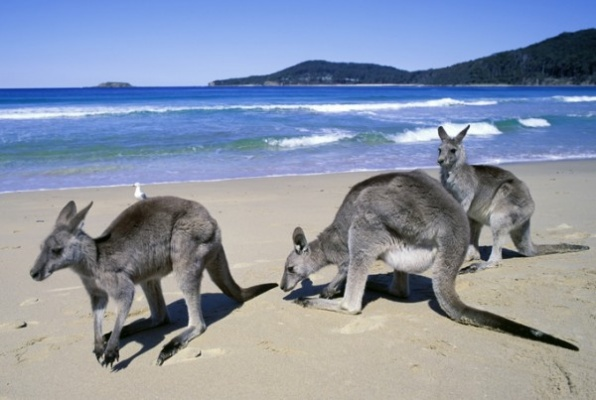 Things To Do In Forster For Kids